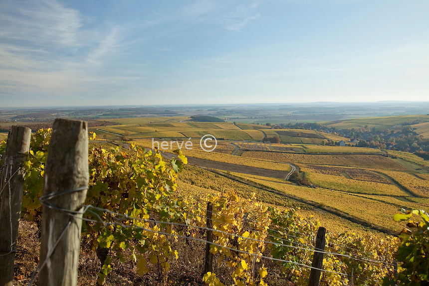 France, Berry, Cher (18), Sancerrois, Bué, le vignoble (A.O.C. Sancerre) en automne après les vendanges // France, Berry, Cher , Sancerrois, Bué, the vineyards in autumn, vines in A.O.C. Sancerre