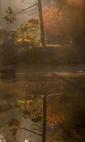 Autumn Dogwoods, Merced River