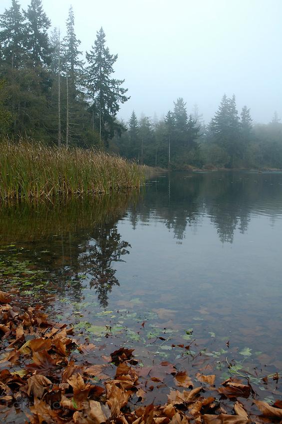 Buck Lake Shoreline