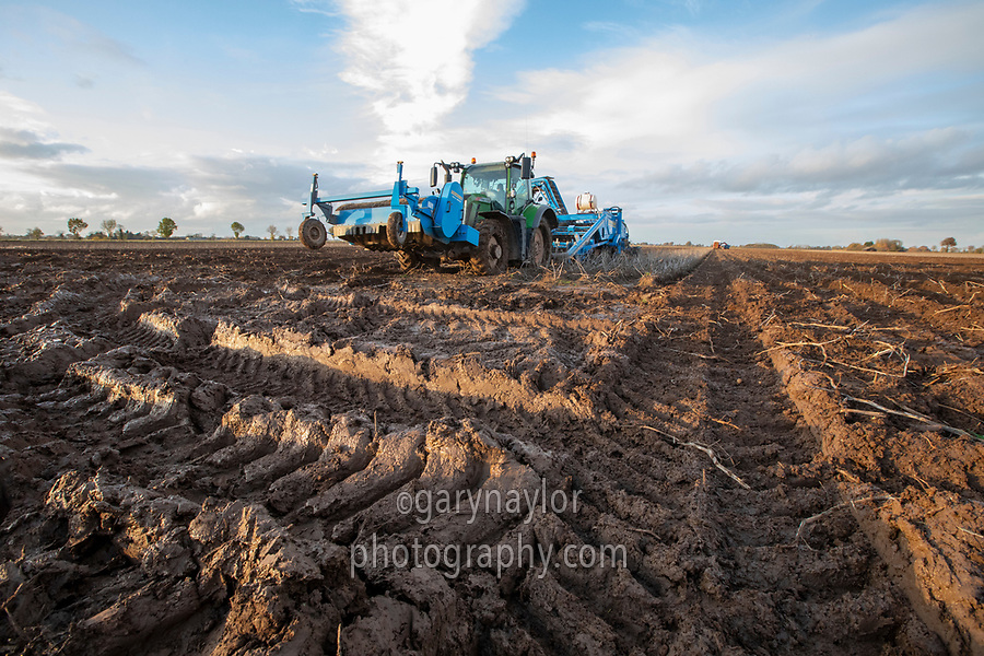 Harvesting potatoes in November following heavy rainfall - Lincolnshire, November
