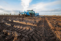 Harvesting potatoes in November following heavy rainfall - Lincolnshire, November