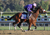 Sweet Reason, trained by Leah Gyarmati, trains for the Breeders' Cup Juvenile Fillies at Santa Anita Park in Arcadia, California on October 30, 2013.