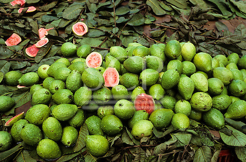 Amazon, Brazil. Guava (Psidium guajava) fruits on a bed of leaves, some cut open to show the inside.