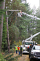 Nov 2, 2013:  Power crew members Ed Fletcher (In Bucket) and Mike Barkley, (crain operator)lineman Chad Lohrey and Forman Bill Boggs form Potelco worked to repair a #4 Copper wire that was knocked down when a tree was blown down along Tracyton NW Blvd and Stampede NW Blvd.