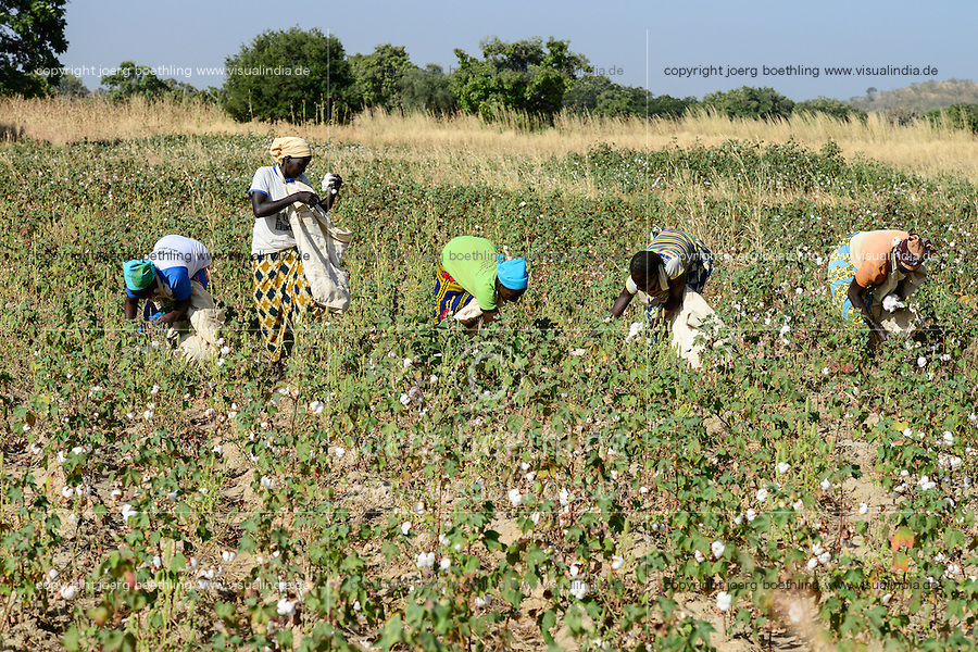 BURKINA FASO, village GOUMSIN near SAPONE, organic and fair trade cotton farming, manual harvest at farm / fair gehandelte Biobaumwolle, Frauen bei der manuellen Ernte