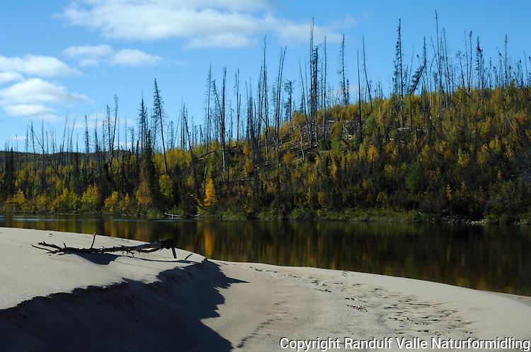 Gammelt skogbrannfelt ved Snowdrift River ---- Signs of forest fire by Snowdrift River