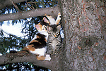 Kittens in tree