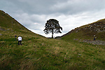 Day 2 - Sycamore Gap with its iconic Sycamore tree.
