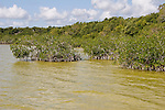 Tannins are given off by the mangroves and can stain the water yellow or red.