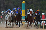 January 18, 2016: The field coming down the final back streach during the Smarty Jones Stakes at Oaklawn Park in Hot Springs, AR. Justin Manning/ESW/CSM