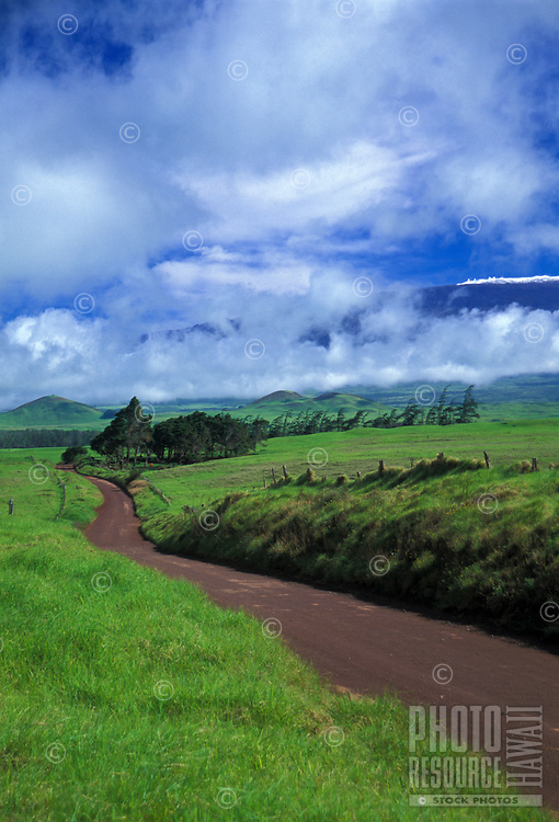 Country road curves through pasture land with snow capped mauna kea in background, North Kohala Big island of Hawaii