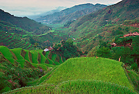 Rice Terraces, Banaue,Philippines