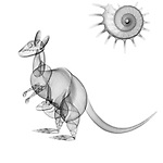 X-ray image of a kangaroo (black on white) by Jim Wehtje, specialist in x-ray art and design images.