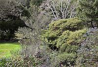Winter trees, East Bay Regional Parks Botanic Garden, California native plant