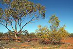 Sturt National Park - Outback New South Wales -<br />