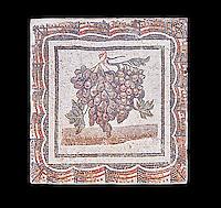 3rd century Roman mosaic panel of black and white grapes. From Thysdrus (El Jem), Tunisia.  The Bardo Museum, Tunis, Tunisia. Black background