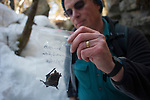 New York bat biologist Al Hicks holds a dead bat specimen collected at the entrance to a mine infected by white-nose syndrome.