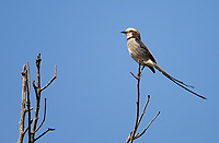 Another of the many bird species seen and photographed in Emas National Park.