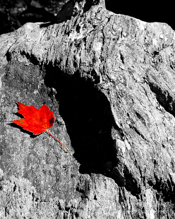 A black & white granite boulder with many lines and crags with shadows and light is seen with a single red maple leaf in color on the surface.