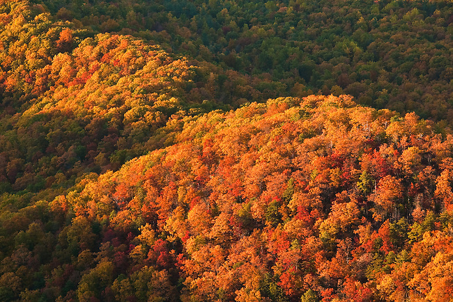 Autumn forest detail, Shenandoah National Park