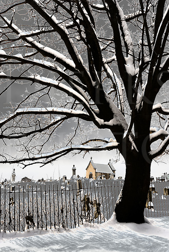 This cemetery view had a special digital process applied to it in order to fit the title better and I was trying to go from just &ldquo;spooky-looking&rdquo; to &ldquo;spookier&rdquo;. That digital twist-up turned the snow to gray and heavily contrasted the tree limbs with a strange light, both of which added to the weirdness. I most often don't use any processing this heavy handed, but this one called for it and I'm glad it worked out well. It's unusual yet beautiful, weird and wonderful.<br />