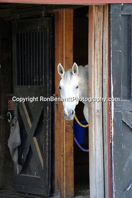 White horse looks out barn door Philomont Virginia; Horse; horse barn; barn door; horse and barn door,