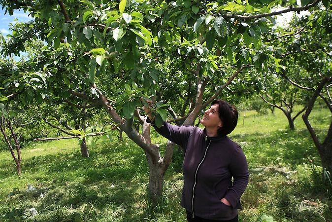 Ökolandbau in Georgien: Marika Kandorelashvili auf ihren Feldern in Georgien / Organic farming in Georgia: Marika Kandorelashvili on her fields