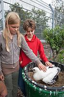Mädchen betrachtet Weißstorch, Weiss-Storch, Weisstorch, Storch, pflegebedürftiger, verwaister Vogel in der Wildtierstation, Wildtierhilfe