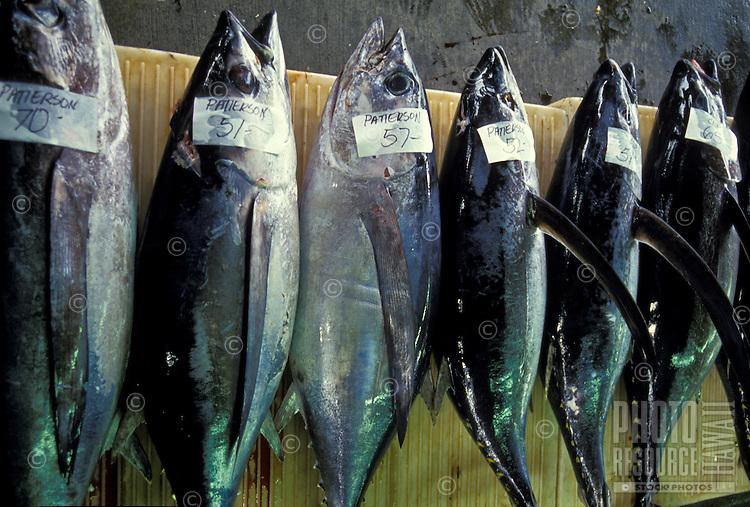 Row of fish at Suisan Fish Auction, Hilo, Hawaii