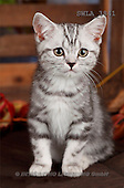 Carl, ANIMALS, photos(SWLA3841,#A#) Katzen, gatos
