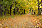Michigan Autumn road