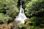Waiatiu Falls, Whirinaki Forest, North Island, New Zealand