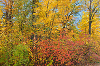 Forest in autumn colors. St. Vital Park<br />