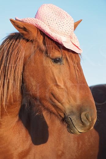Horse wearing pink straw cowboy hat, a sorrel horse portrait in evening sun.