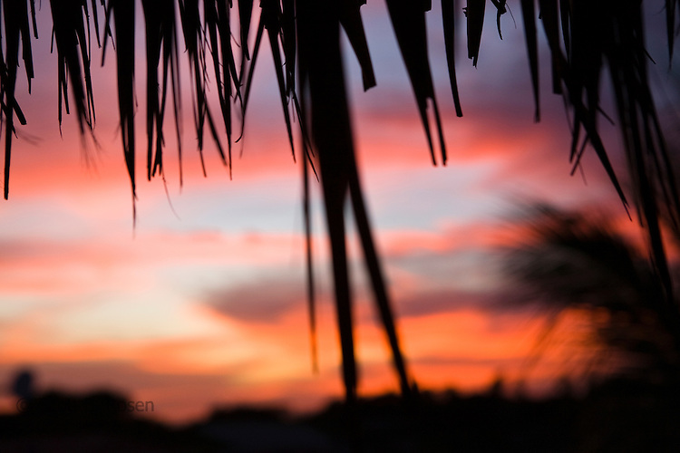 Sunset through palm leaves at Las Penitas, Nicaragua