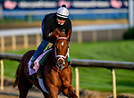 LOUISVILLE, KENTUCKY - APRIL 29: Out for a Spin, trained by Dallas Stewart, exercises in preparation for the Kentucky Derby at Churchill Downs in Louisville, Kentucky on April 29, 2019. John Voorhees/Eclipse Sportswire/CSM