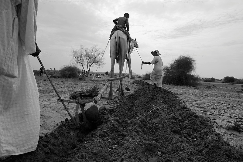 North Darfur, August 23, 2004.Between El Fasher and Kutum, in an area spared by the recent wave of destructions, farmers prepare a field.