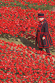 London, UK. 30 July 2014. A Yeoman Warder in the filed of ceramic poppies. A field of ceramic poppies is being planted by volunteers in the moat of the Tower of London. It will finally consist of 888,246 poppies, each representing a British or Colonial soldier fallen during the First World War.