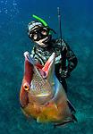 Cressi hogfish