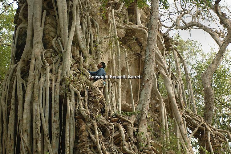 7319 Oxpemul; Maya; Ancient Cultures; Mayan; Mexico; Maya Biosphere Reserve; Ivan Sprajc; CRE Grantee; Stela; Oxpemul; Yax Noh Cah; House of the Tree