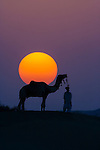 Camel and person at sunset, Thar Desert, Rajasthan, India