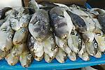 Africa, Afrika, Senegal, 17-09-2011, Dakar, Dakkar, Vismarkt van Dakar, De vis wordt tegen de avond aan wal gebracht door de mannen , waarna de vrouwen de vis verhandelen.  De Lot, en bekende vissoort in Senegal. foto: michael Kooren/HH