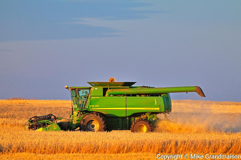 Combining wheat<br /> Tuxford<br /> Saskatchewan<br /> Canada