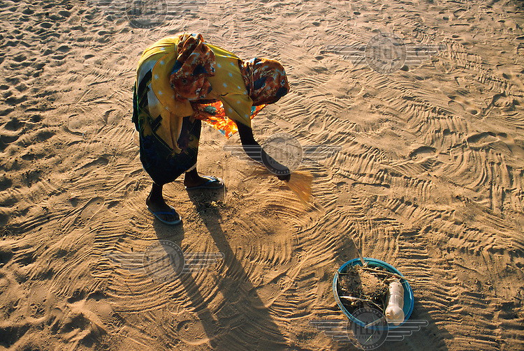 Woman gathering seeds in the refugee camp in the border town of Tine. Thousands of refugees from Darfur province in Sudan have fled to Chad to escape attacks by Arab militias allied to the Sudanese government.