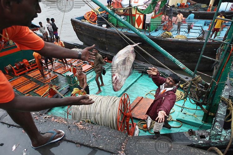 Fisherman unloading their boat in Sassoon Dock after returning from a fishing trip lasting several weeks in the Indian Ocean. The fresh catch is sold on the spot. The bigger fish, shrimps and prawns are sold to export companies. Fish production in India has increased more than fivefold since independence making it one of the world's leading seafood exporting nations..