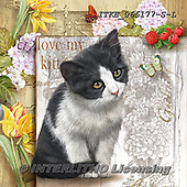 Isabella, REALISTIC ANIMALS, REALISTISCHE TIERE, ANIMALES REALISTICOS, paintings+++++,ITKE066177-S-L,#a#, EVERYDAY ,cats ,collage