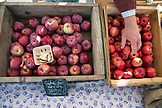 USA, Oregon, Ashland, Gala apples from the Upper Rogue Organics farm are for sale at the Rogue Valley Growers and Crafters Market