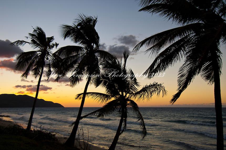 3 Palms at Sunset<br /> Cane Bay<br /> St Croix<br /> U.S. Virgin Islands