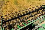 URUGUAY Bella Uni&ograve;n , 2100 Hektar Farm der Brueder Karol und Aleco Pinczak, Nachkommen polnischer Einwanderer, Reis Ernte mit John Deere Maehdrescher , Erntertrag 10 Tonnen pro Hektar, Reisfelder wurden durch Wasser vom Fluss Uruguay bewaessert / <br /> URUGUAY Bella Union, 2100 hectares farm, paddy harvest with John Deere combine, yield 10 tons per hectare, rice fields irrigated with water from river Uruguay