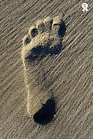 Footprint in sand on beach, close-up (Licence this image exclusively with Getty: http://www.gettyimages.com/detail/104320844 )